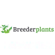 BREEDERPLANTS V.O.F.